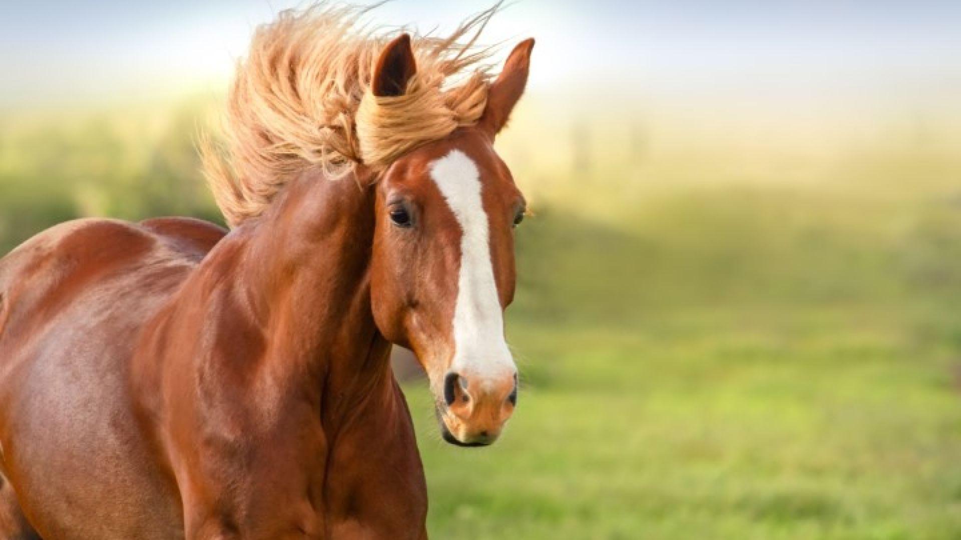Простреляха 8 коня, две от животните починаха