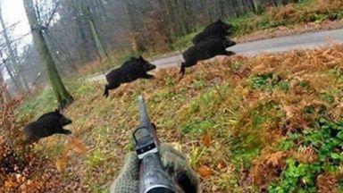Ограниченията за лов на диви свине падат частично