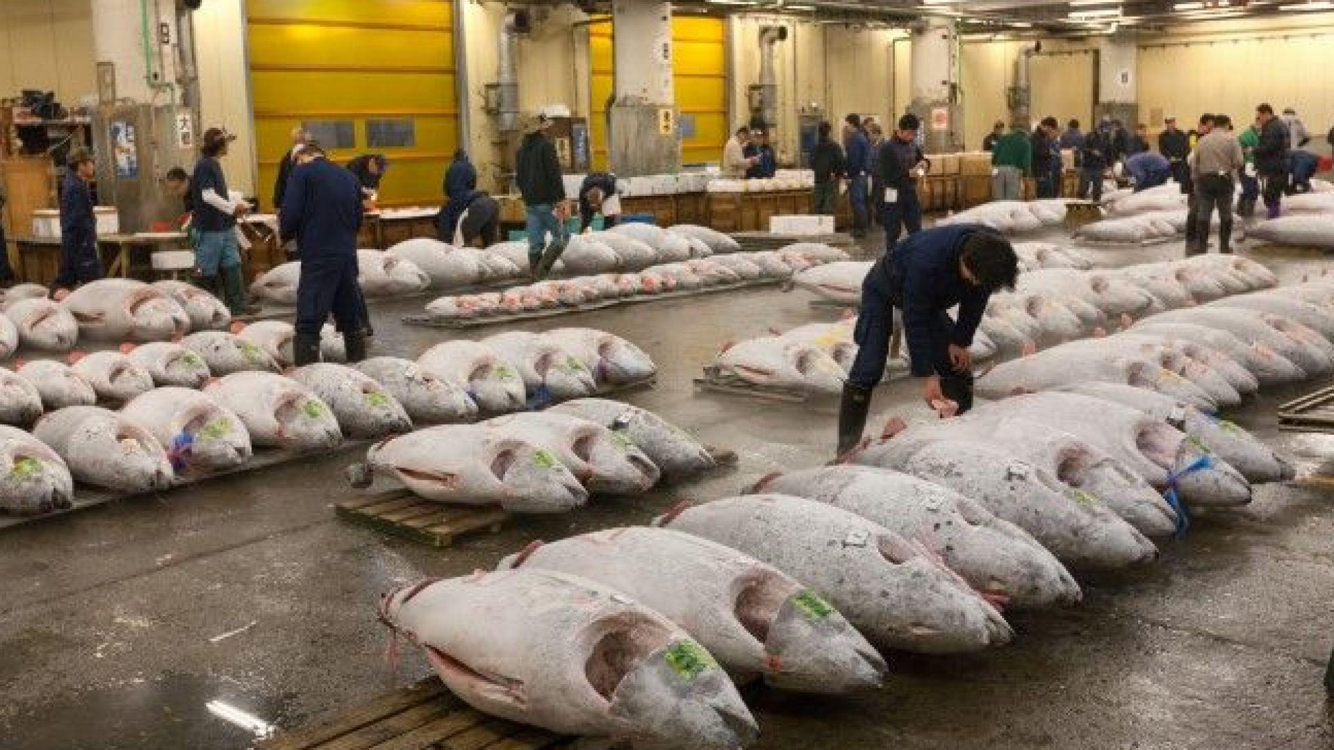 Прочутият рибен пазар в Токио проведе последния си търг