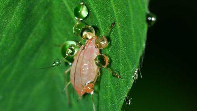 Пентагонът прави ГМО армия от насекоми
