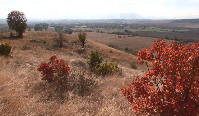 В нива край селото полицаите установили вкопани в земята 137 саксии с канабис и инвентар за обработка