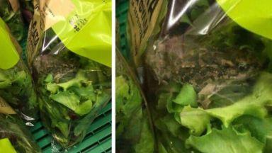 Откриха жива жаба в опакована салата в Гърция (снимки)