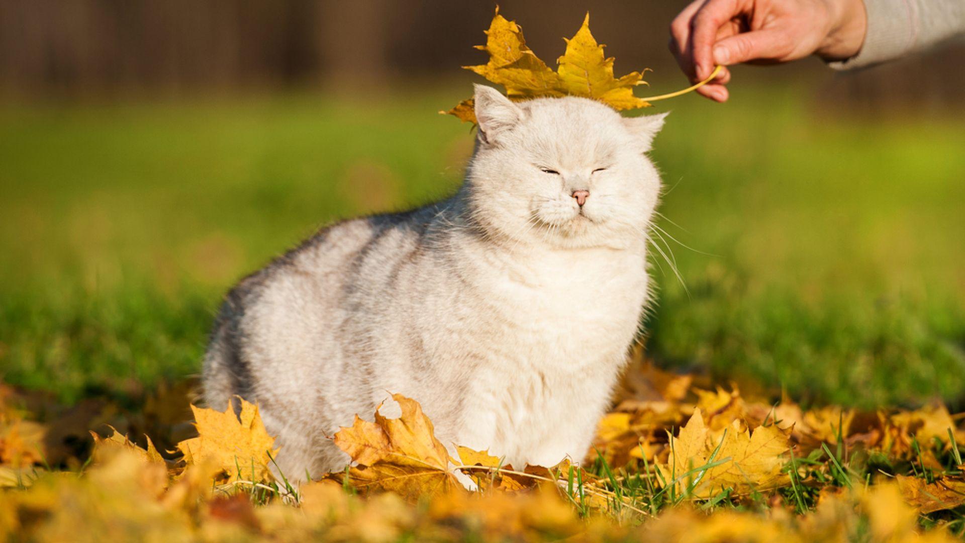 Спокойното есенно време продължава
