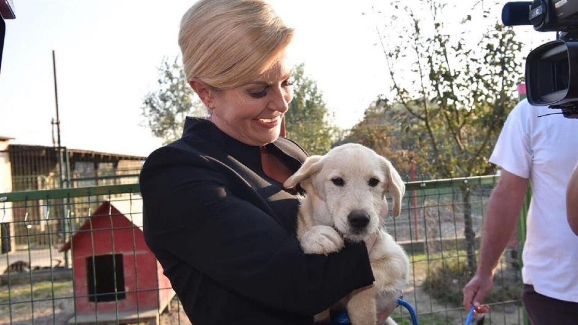 Хърватската президентка осинови куче от приют