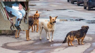 Млада жена бе нахапана жестоко от бездомно куче