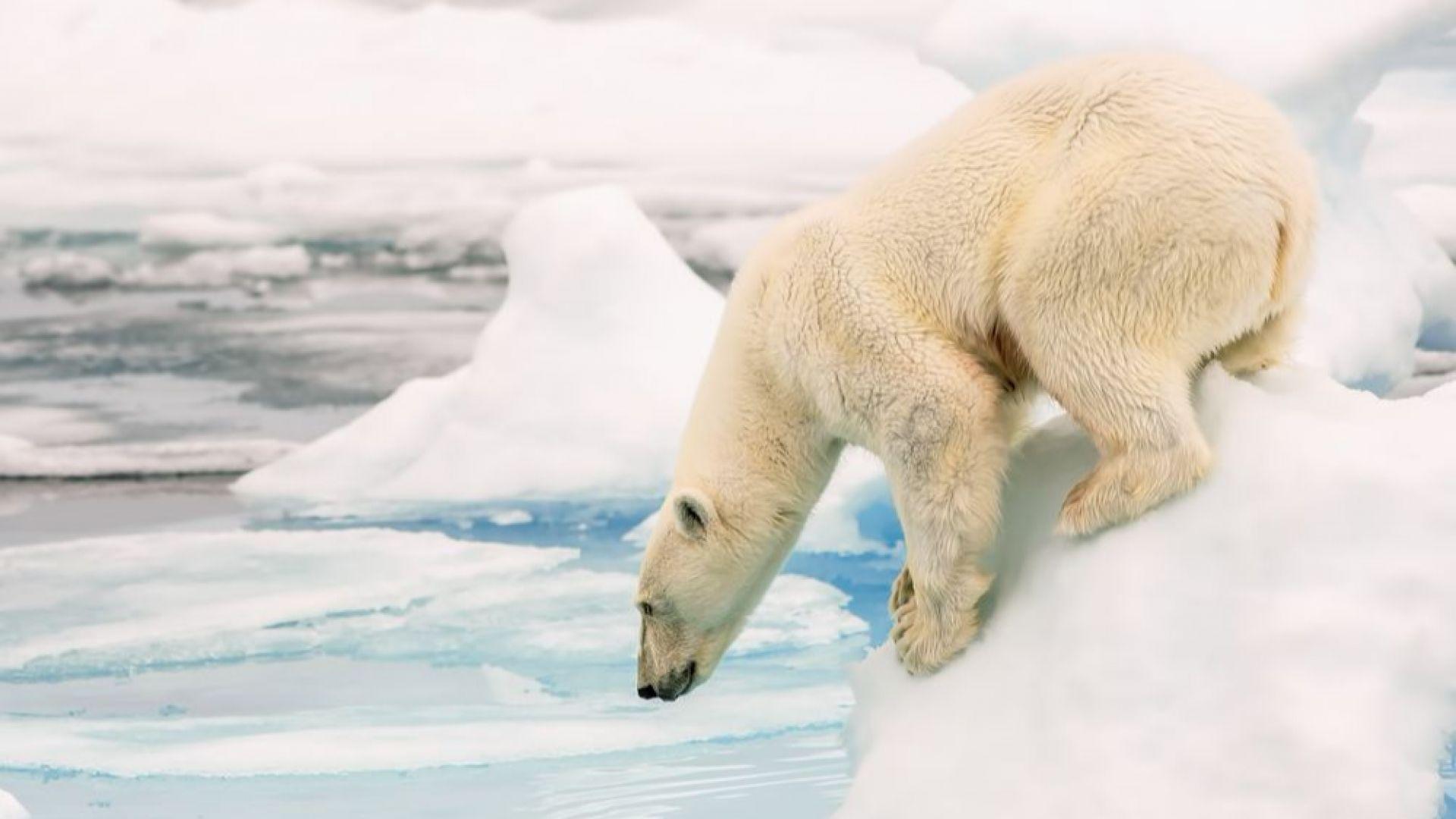 Морският лед - все по-тънък (видео на НАСА)