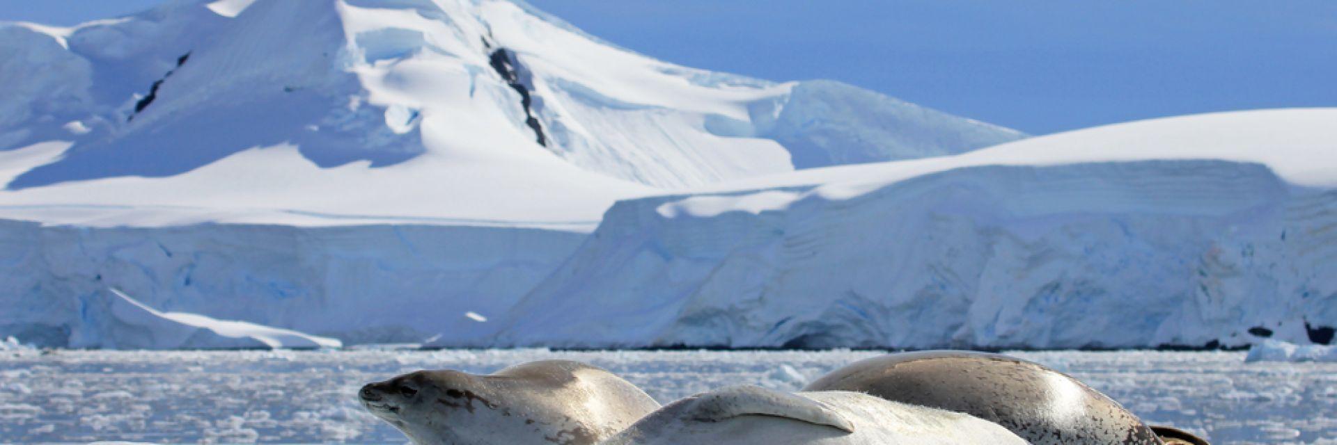 Песните на антарктическия лед (видео)