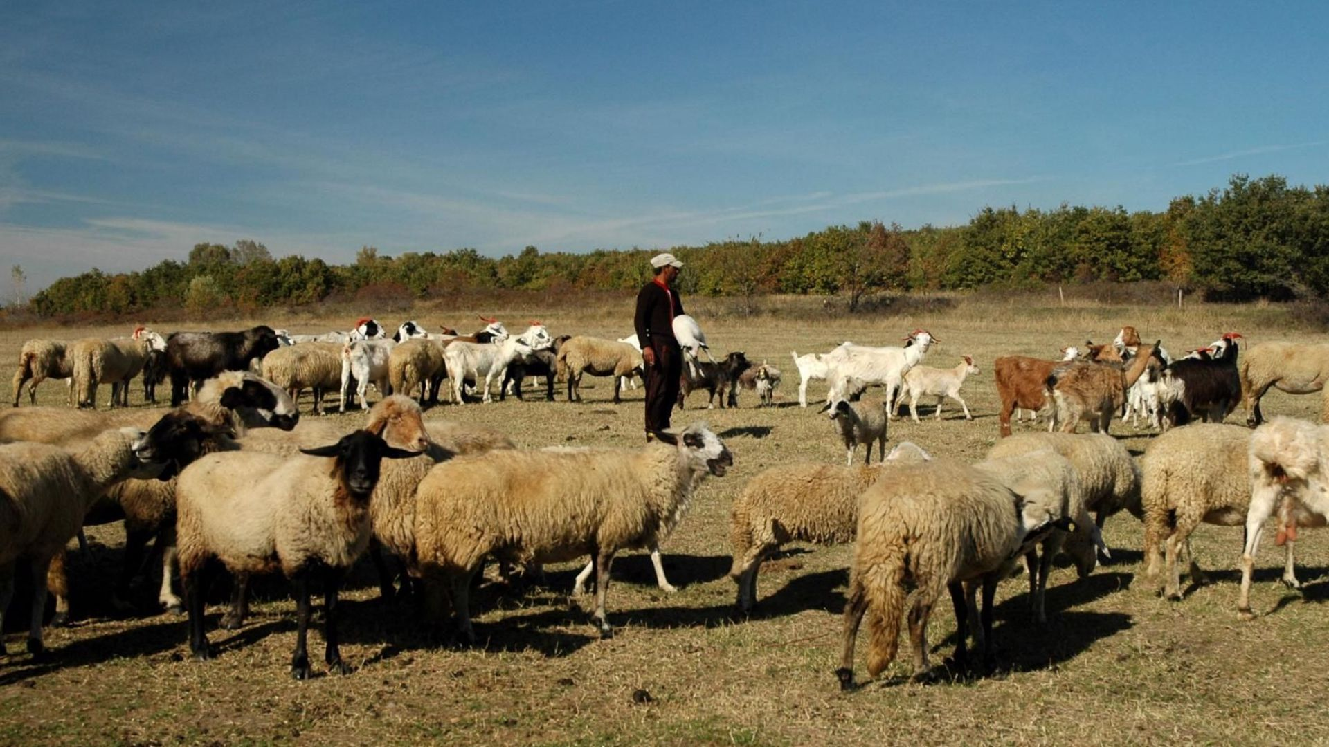 Изискване: Всеки овчар с тетрадка по време на работа