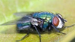 Ферма за мухи вдигна на протест жителите на Лозен