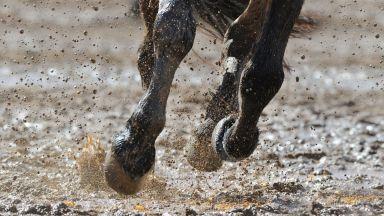 2-годишно дете загина, стъпкано от кон с ездач
