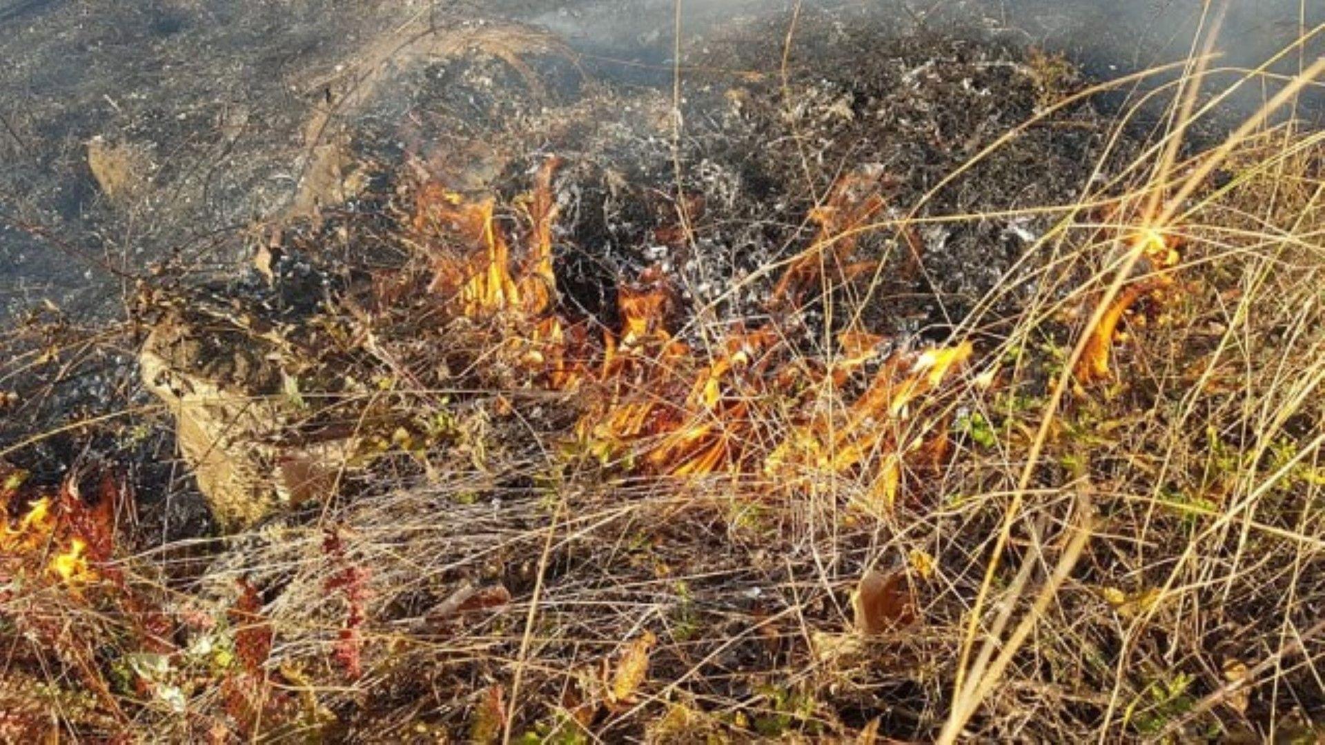 """Гори пожар край 72-73-ти км на магистрала """"Тракия"""" около Пазарджик"""