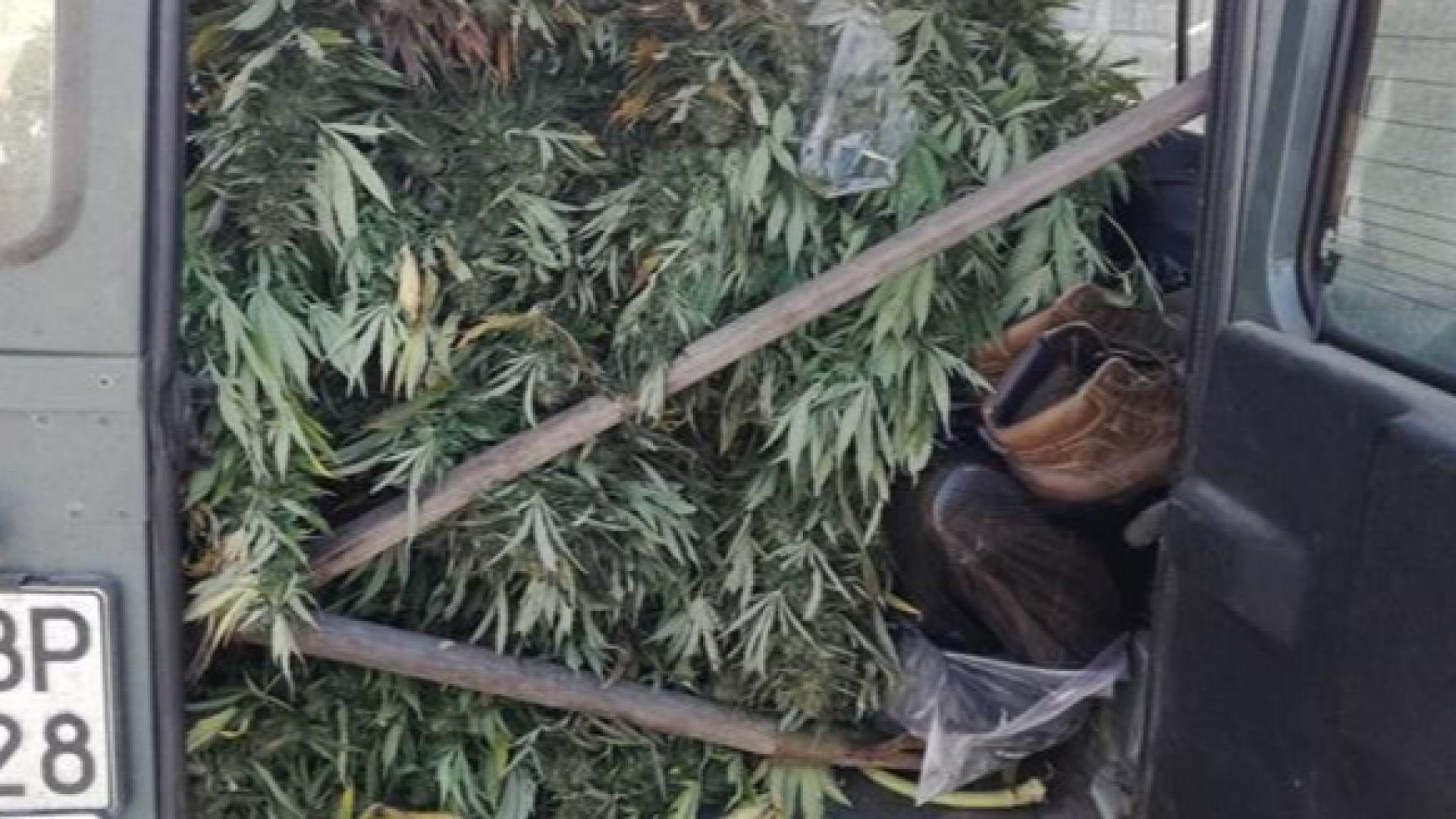 Спипаха над 40 кг канабис в Бургаска област