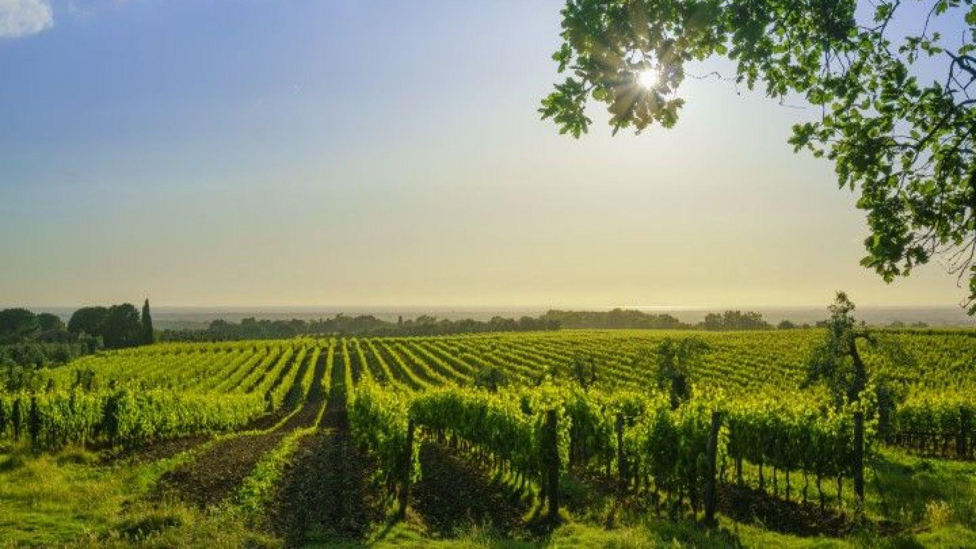 Италия предлага земеделска земя на семейства, планиращи трето дете
