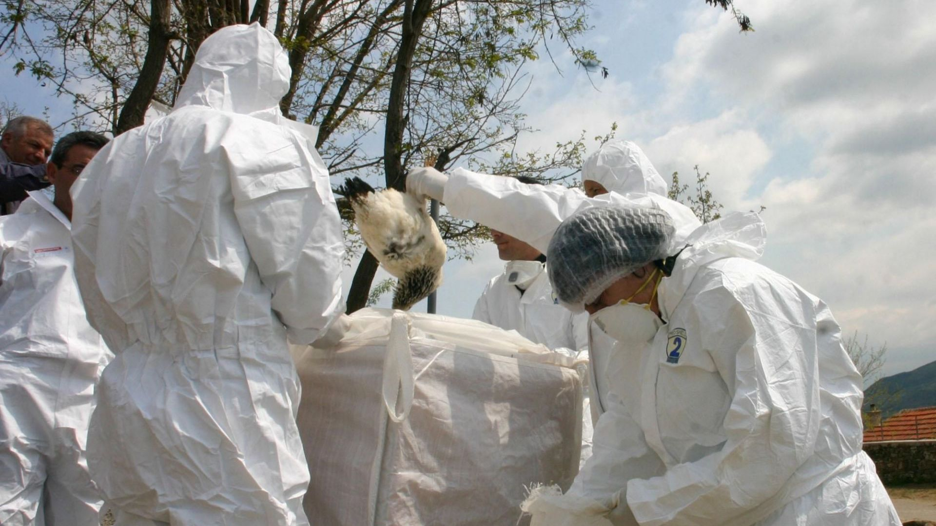 Птичият грип се завърна в България
