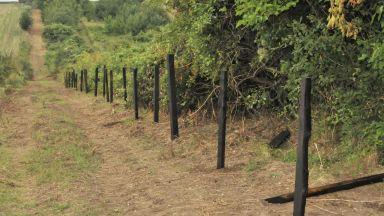 Избиват диви свине и хищници край Каварна заради африканската чума