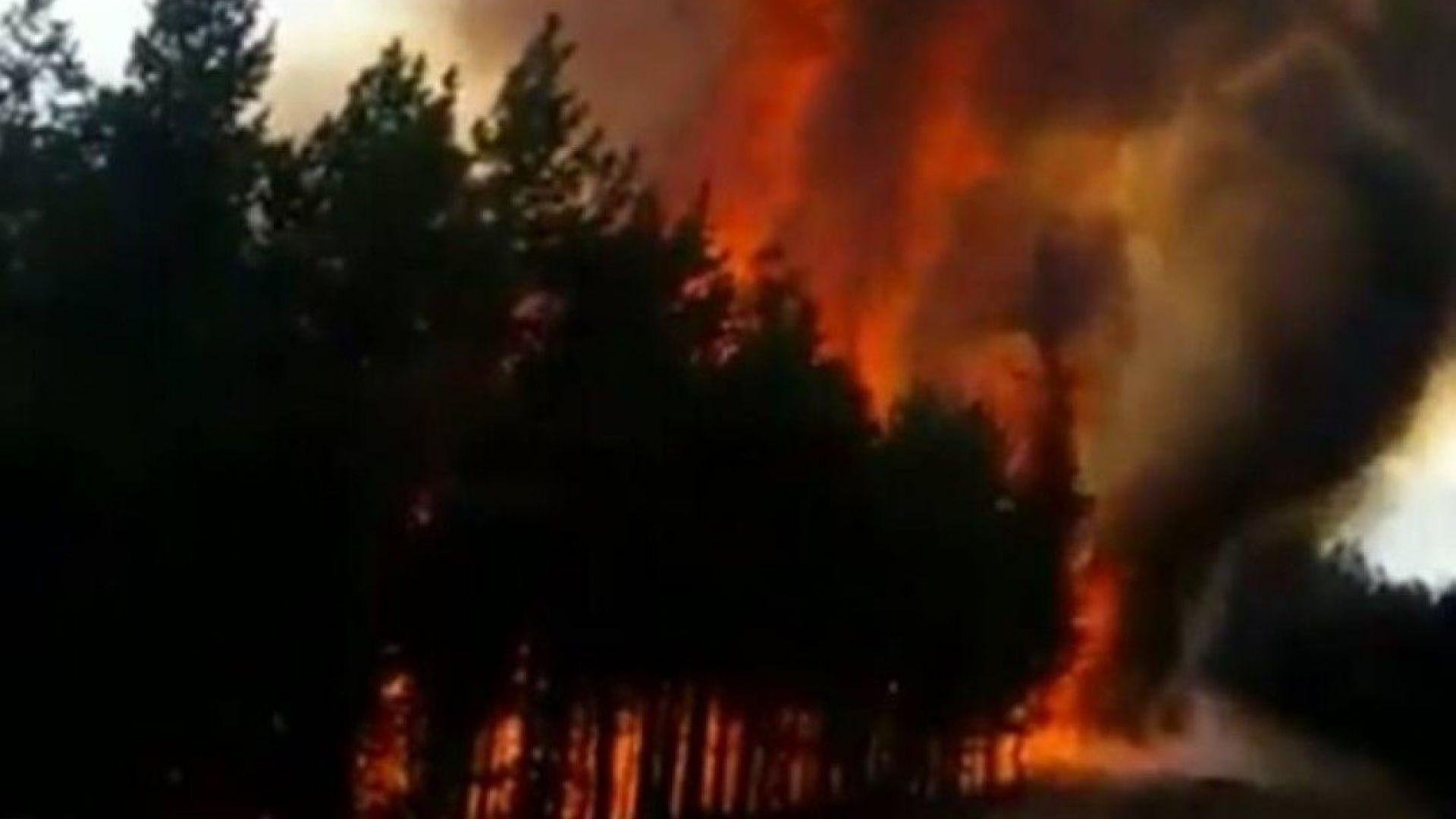 Два пожара в Родопите, край Белица гори борова гора