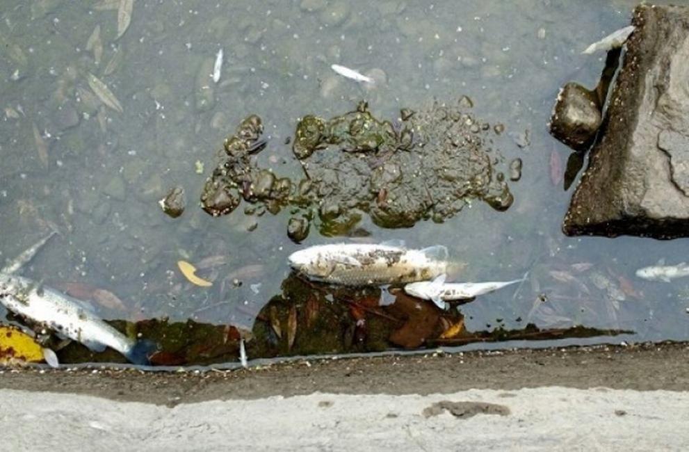 Открита е мъртва риба във водоем край Поморие