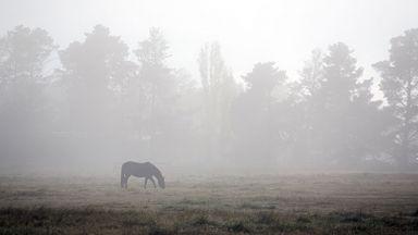 Повече облаци и мъгли през седмицата, захлаждане през почивните дни
