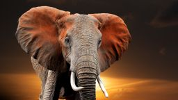 Бозайниците - застрашени от измиране, заради човека