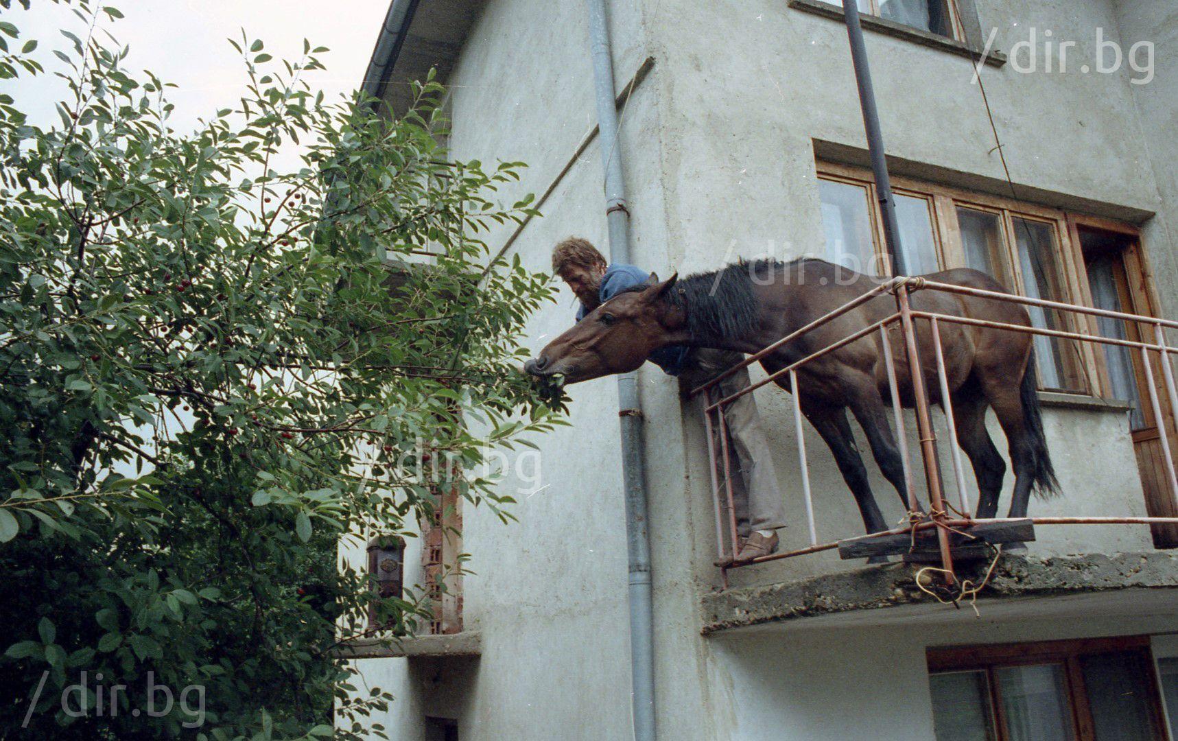 Кон и череши яде... 1991 г.