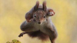 Вижте най-смешните животни на планетата