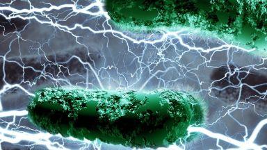 Биолози отправят призив за опазването на паразитите