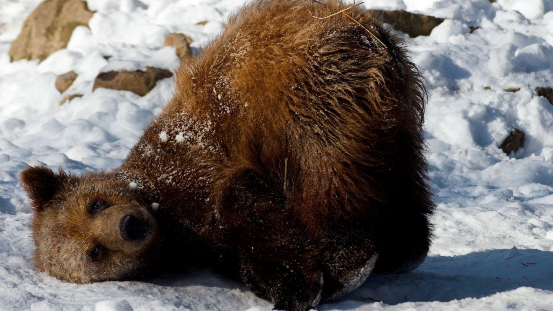 Не само мечките спят зимен сън - любопитни факти