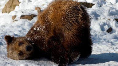 Не са само мечките: Вижте кои спят зимен сън