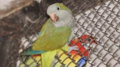 Зоопаркът във Варна се сдоби с рядък вид папагал