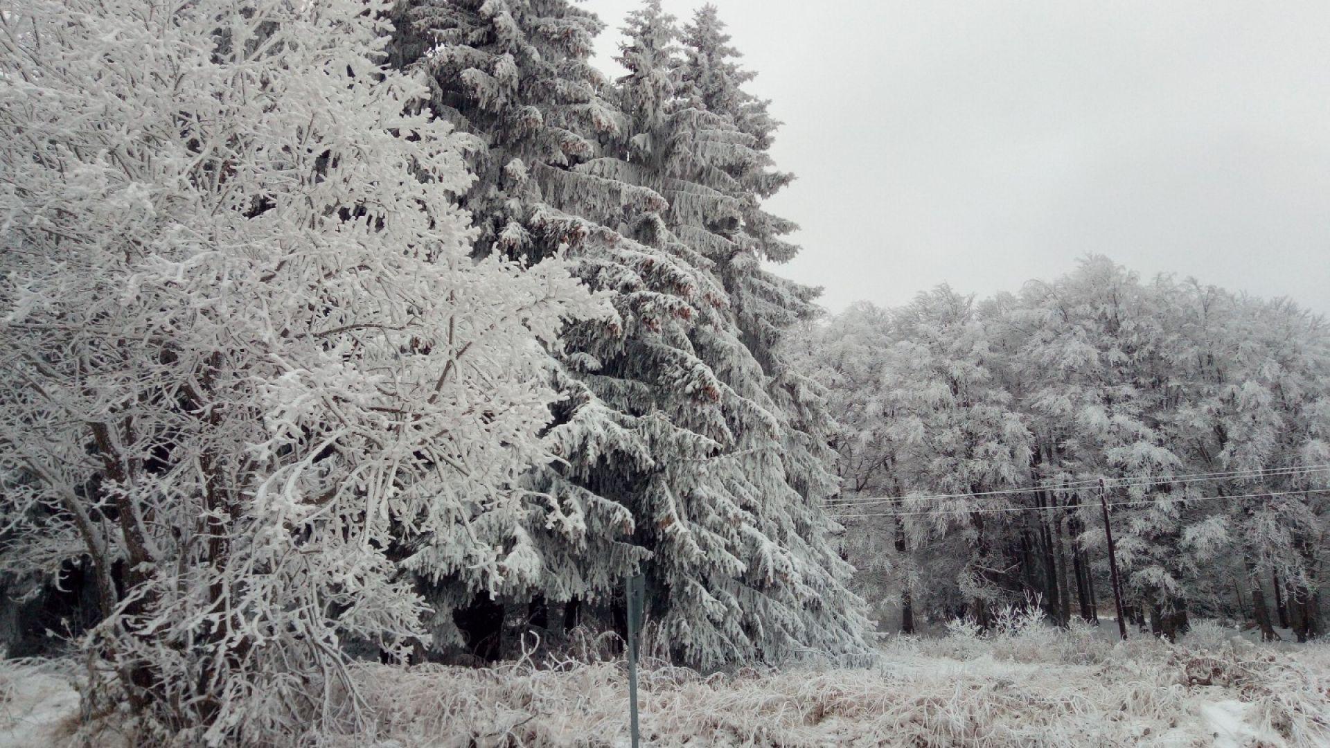 Сняг и студ - зимата се завръща другата седмица