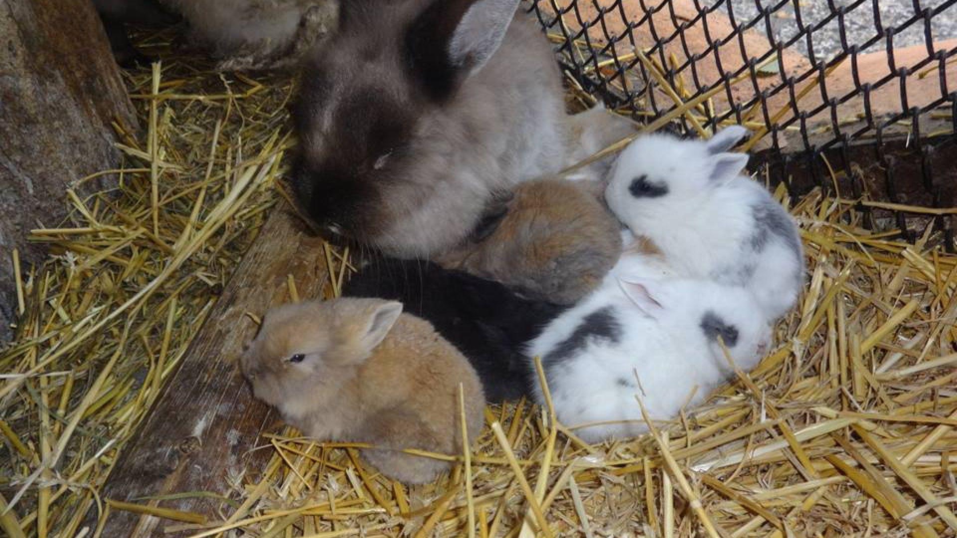 12 малки зайчета се родиха във варненския зоопарк