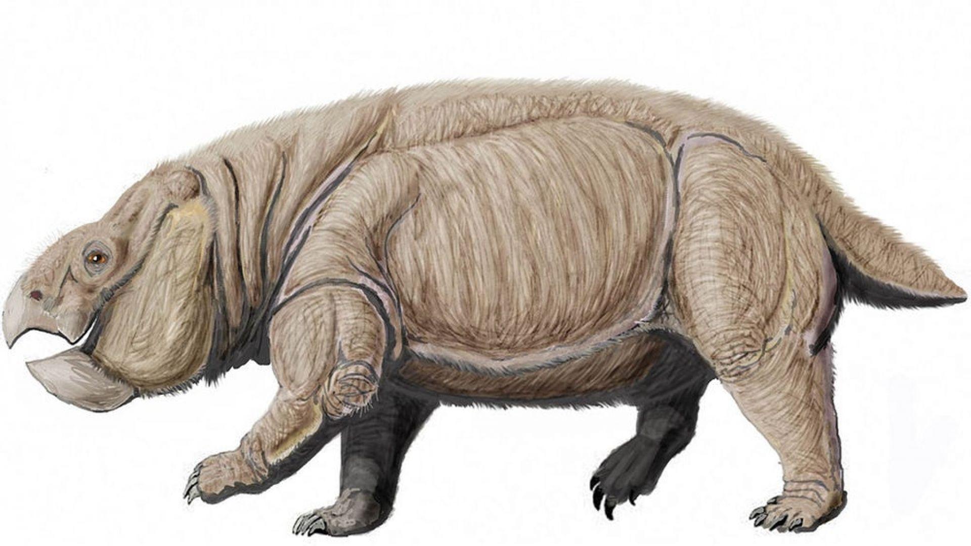 Откриха вкаменелостите на нов вид огромен бозайник