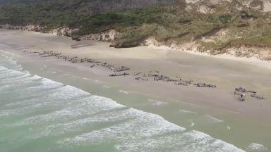 Повече от 140 кита загинаха на брега на новозеландски остров