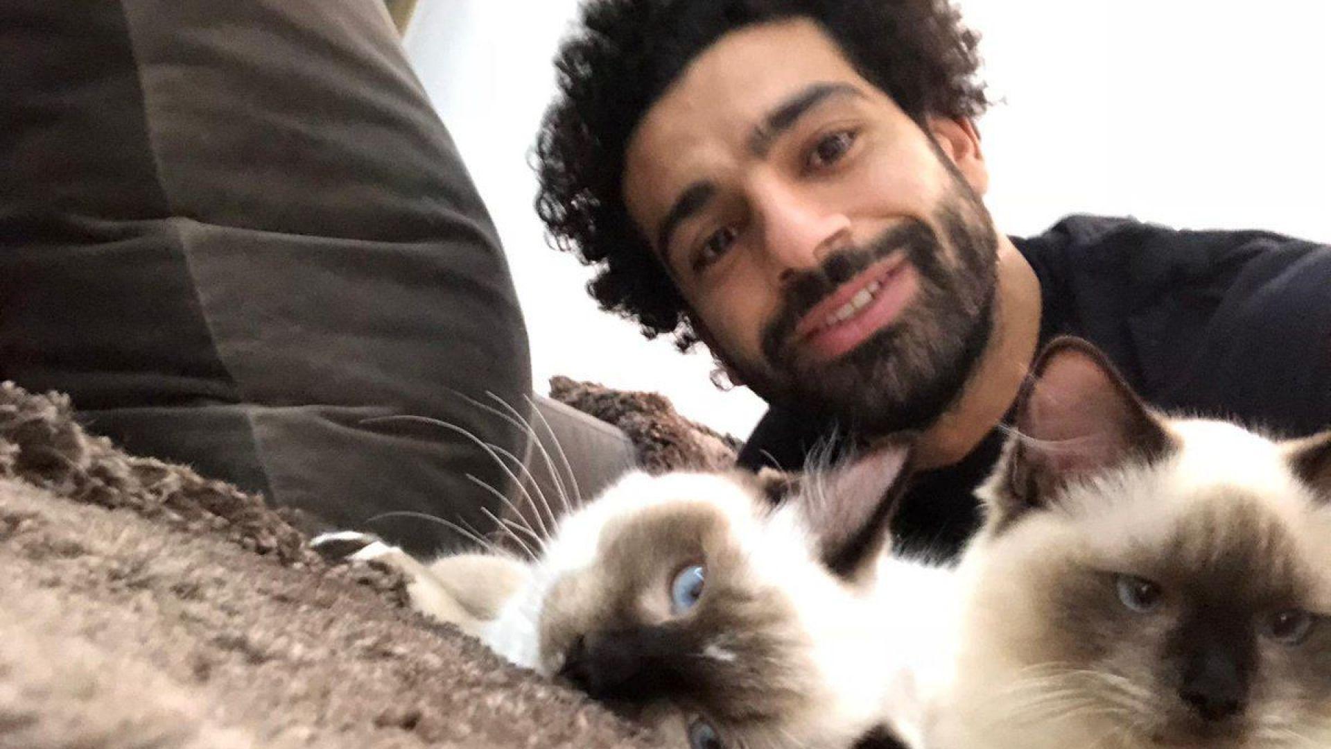 Салах и котките му излязоха на протест