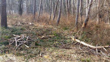 """Задържаха директора на """"Държавно горско стопанство"""" Силистра за подкуп от 4600 лв."""