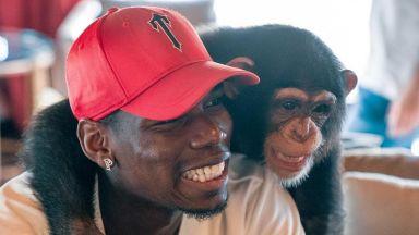 Глезотиите на Погба нямат край, превърна лагера на Юнайтед във фризьорски салон