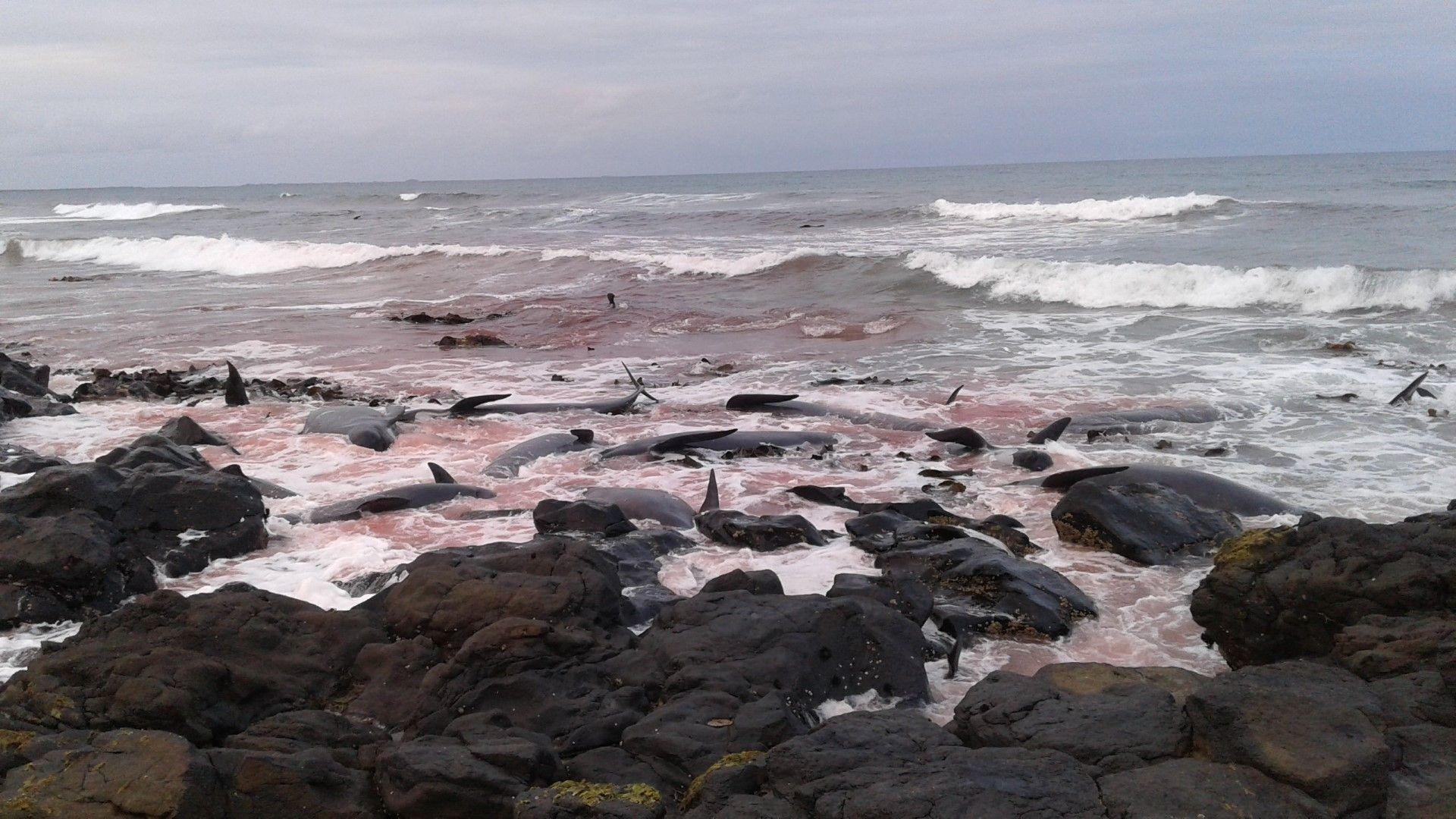 Китове сред крайбрежните скали
