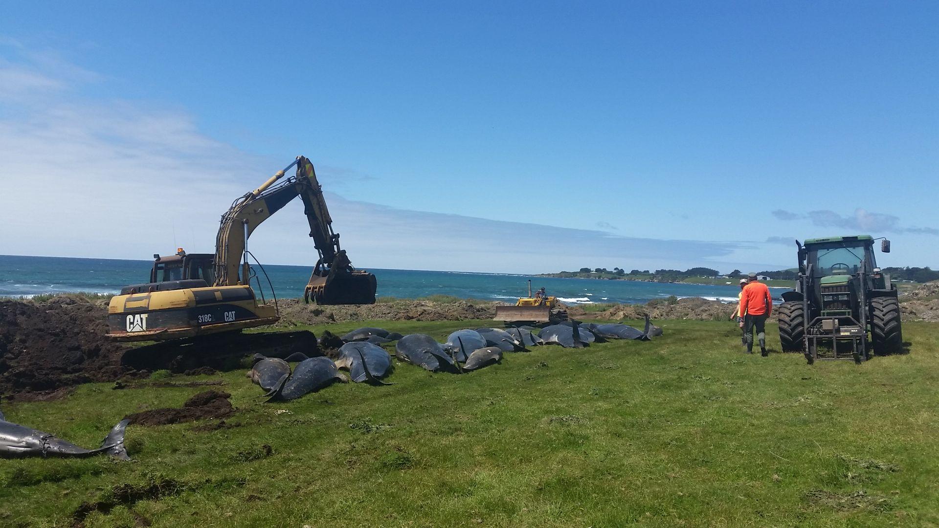 Погребват китовете зад плажа