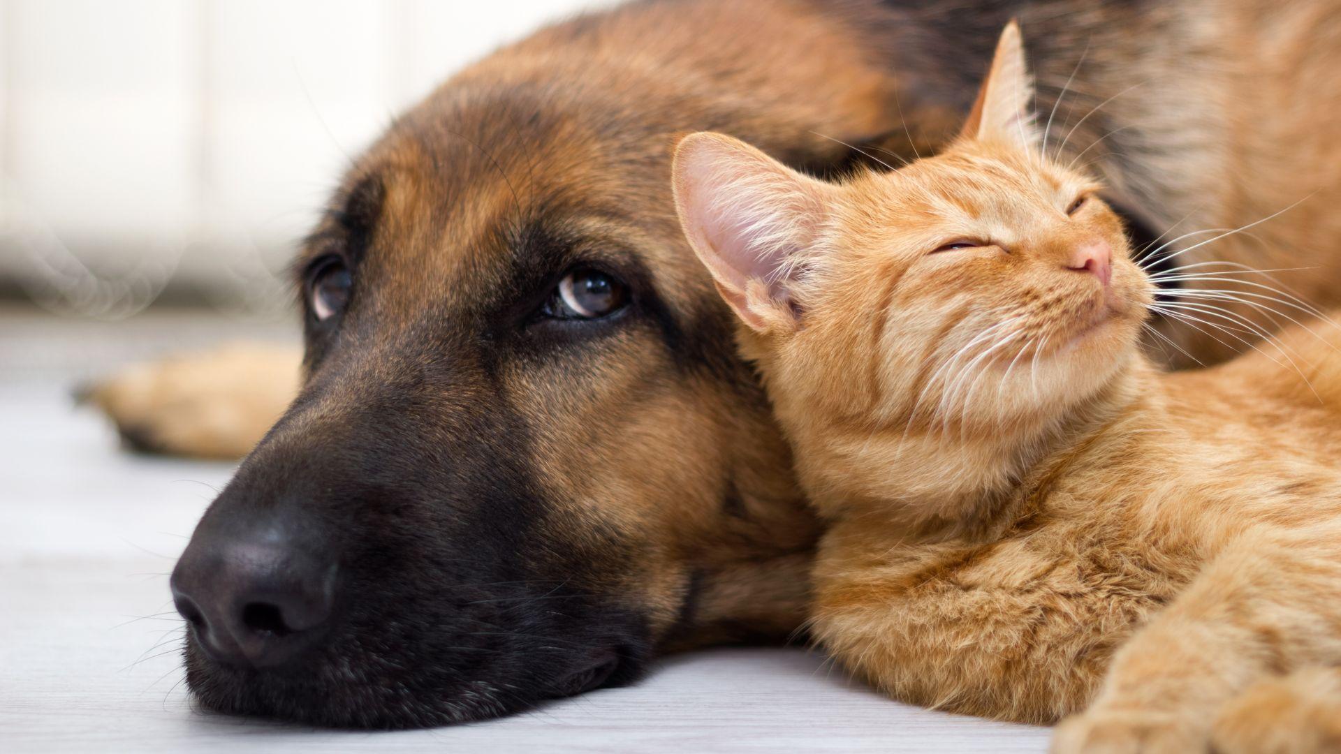 Неизвестен отрови 11 кучета и 1 котка в кюстендилско село