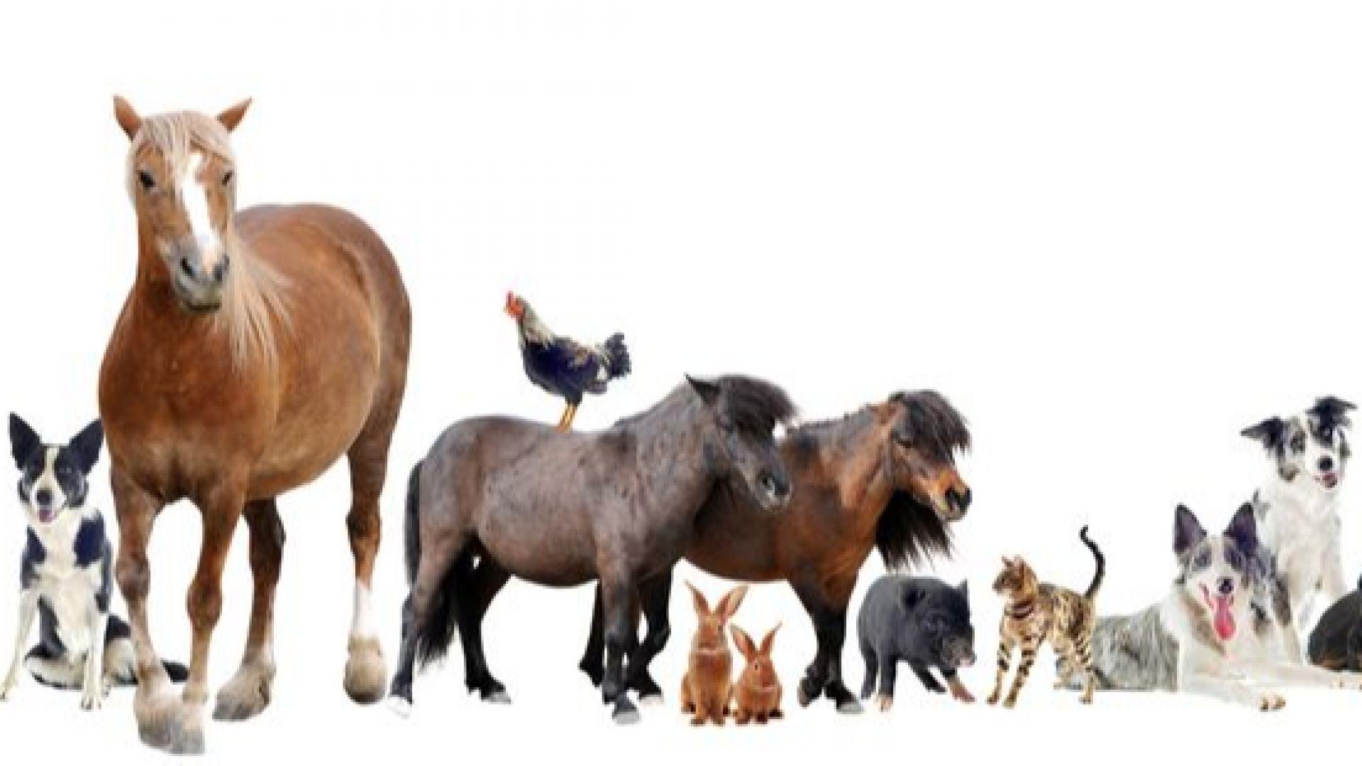 Учени класираха най-интелигентните животни. Кучетата изостават в класацията