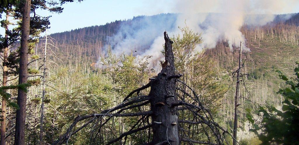 Броят на горските пожари и мащаба на засегнатите територии през последните години достигна критични за България нива, като засегнати са над 1 милион декара гори