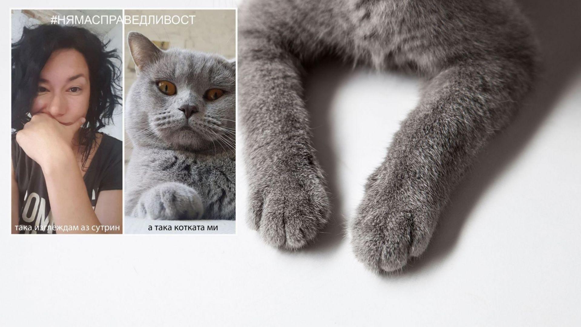 """Котаракът """"енфлоенцар"""" Румен и неговата Ч.Т. откровено пред Life.dir.bg"""
