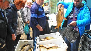 Бургазлии купуват масово шаран, въпреки евтината черноморска риба