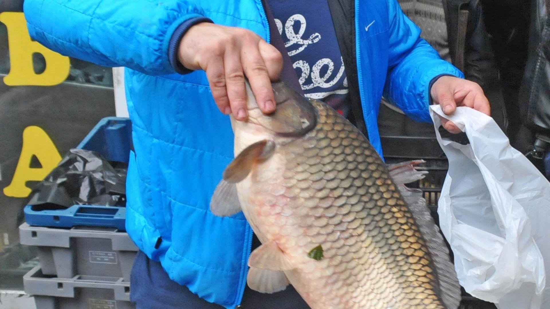 """Експерт: Шаранът може да """"спори"""" за най-вкусна риба"""
