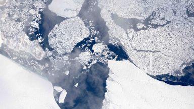 Учени откриха гробище на континенти под антарктическия лед
