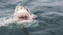Акула отхапа двете ръце на французойка в Полинезия