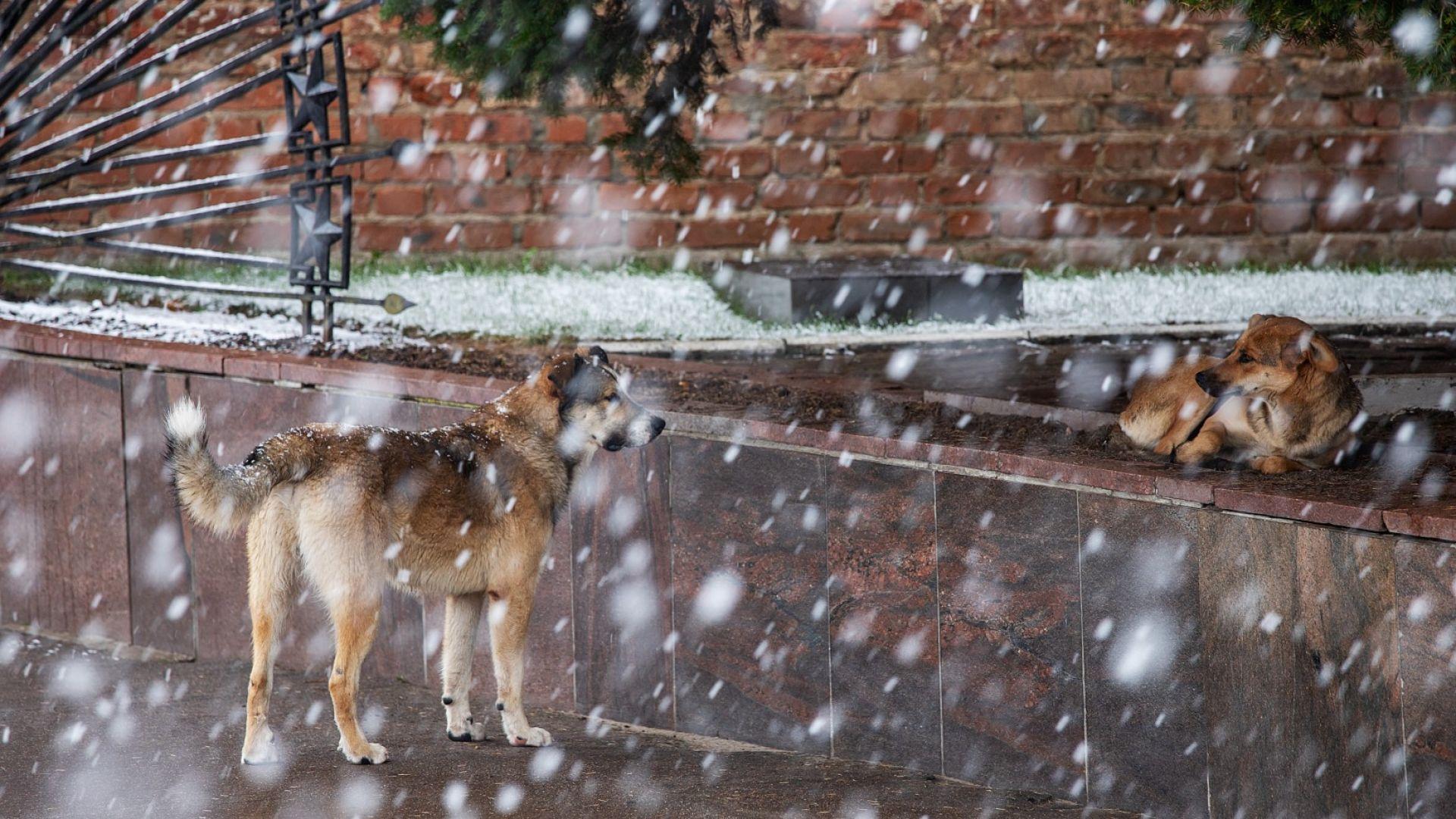 """""""Жълт код"""" е обявен за Южна България, очакват се сняг и виелица"""