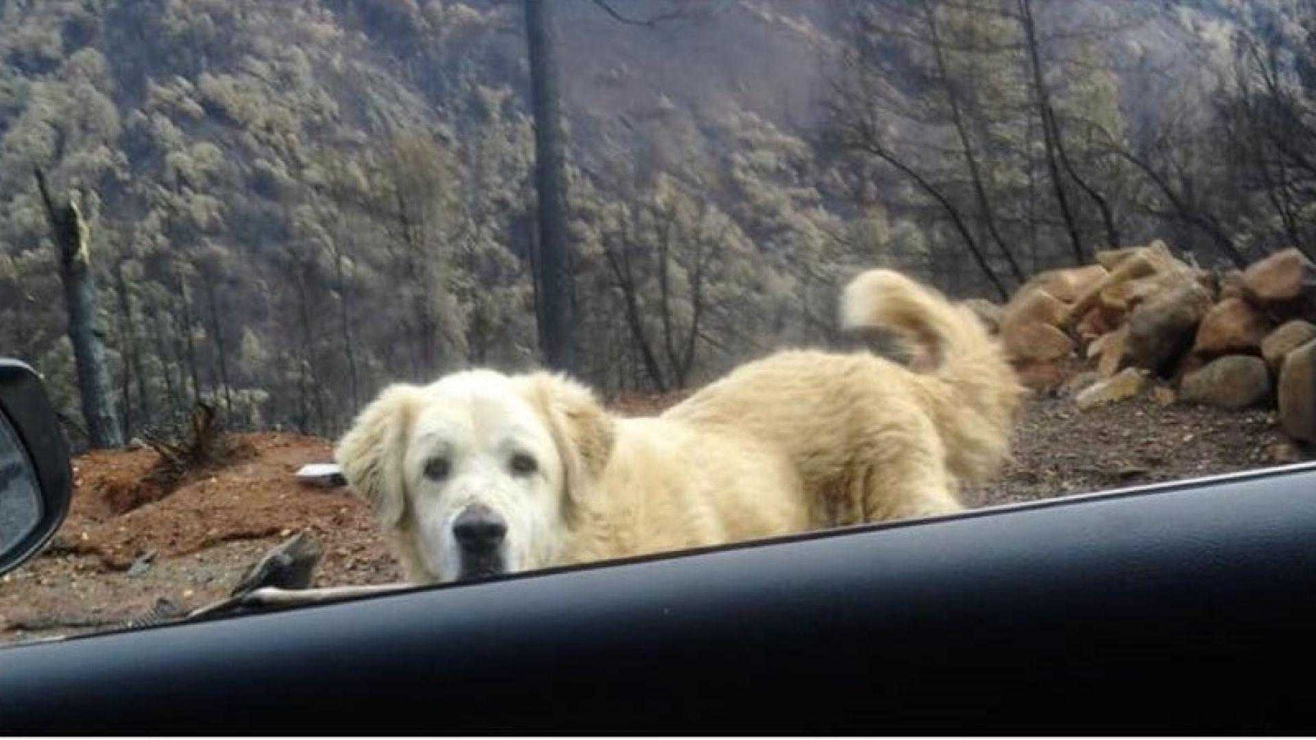 Куче чака стопаните си повече от месец пред изгорелия им дом