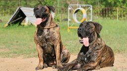 Осъдиха мъж, откраднал две кучета от много скъпа порода