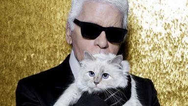 Битка за контрола над Инстаграм страницата на котката на Лагерфелд